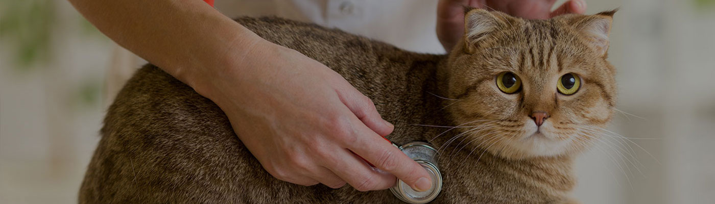 The Best Vets For Your Pets
